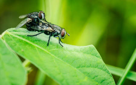 housefly: housefly close up