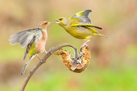 spat: defense of food