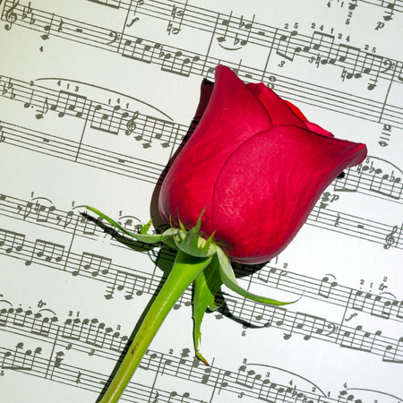 musical score: Musical score above with a red rose