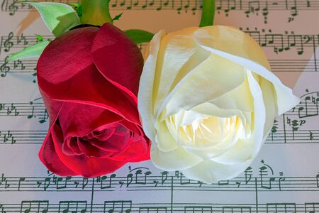 musical score: Red and white roses on musical score