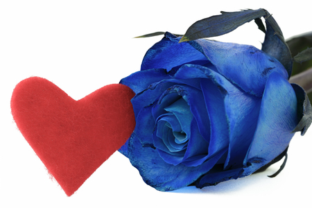 blue rose: blue rose and red heart on white background