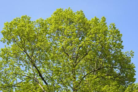 green treetop outdoor in the sky