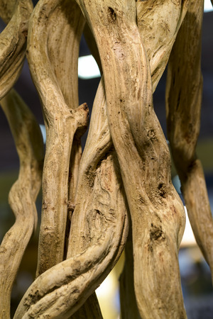 contorted: branches of undulating wood as interior decoration Stock Photo