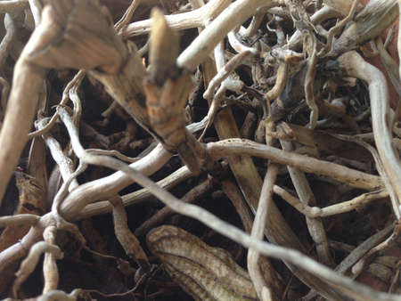 dehydrate: Dehydrate roots