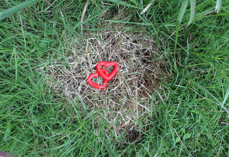 differentiation: two red heart on the grass Stock Photo