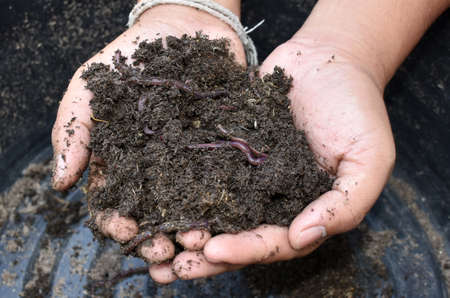 earthworms: Earthworms and soil in hand