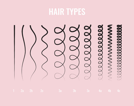 Vector Illustration of a Hair Types chart displaying all types and labeled.