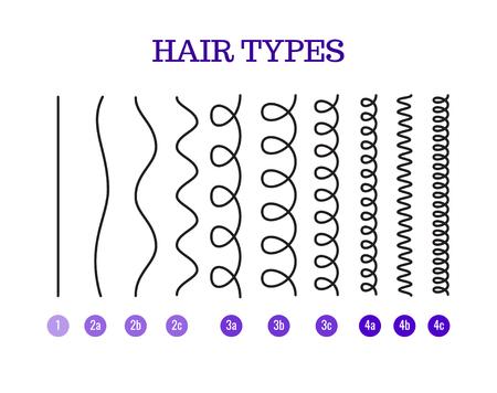 Illustration vectorielle d'un graphique de types de cheveux affichant tous les types et étiquetés. Banque d'images