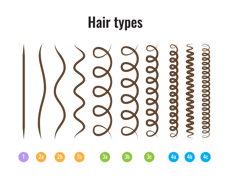 Ilustración vectorial de un gráfico de tipos de cabello que muestra todos los tipos y etiquetados. Foto de archivo