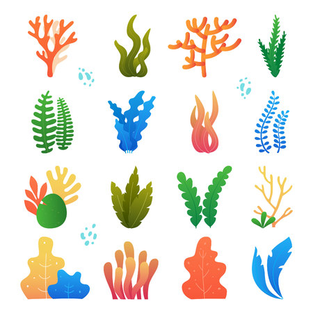 Vector illustration of seaweeds, planting, marine algae and ocean corals silhouettes. Underwater plants for aquarium decor. Isolated set on white background. Nature seaweed marine.