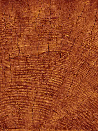 sawn: sawn end the big tree in brown tones