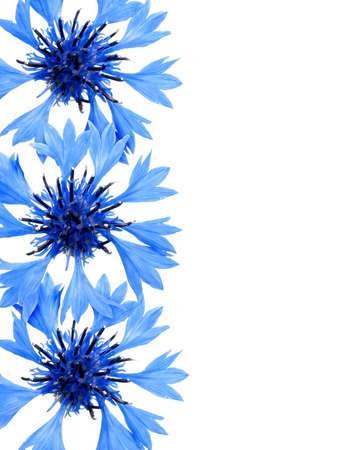 Border from three cornflowers on the isolated white background.