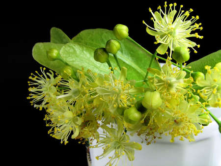 Linden inflorescences in a cup for tea preparation on the isolated black background