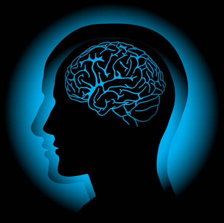 Profile of human head with visible brain. Vector Vector