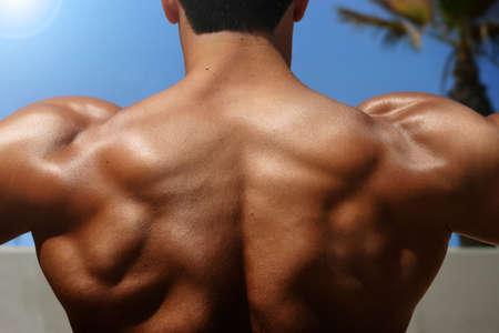 trapezius: bodybuilder foto de la espalda con m�sculos visibles