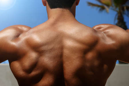 pores: photo of bodybuilders back with muscles visible
