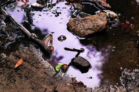 immobile: en el charco de agua que refleja el cielo p�rpura