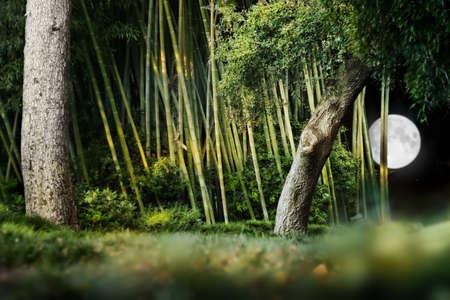 나무, 대나무와 밝은 달 밤 하늘에서 일본 정원의 초현실적 인 밤 풍경 조성.
