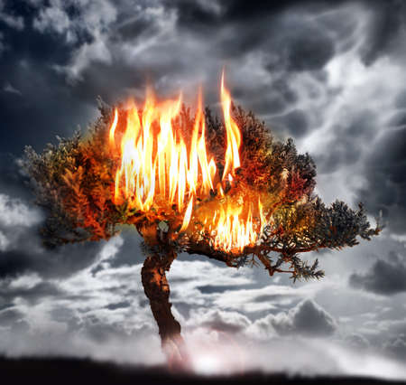 forest fire: Dramatic photo of a burning tree with stormy sky background Stock Photo