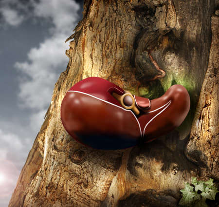 Abstract photo of a human liver growing out of a tree trunk Stock Photo