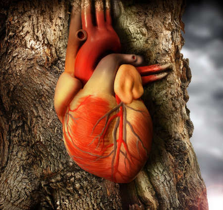 Abstract photo of a human heart growing out of a tree trunk