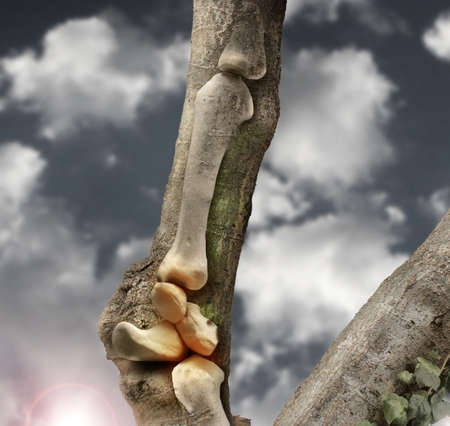 Abstract photo of human bones growing out of a tree trunk