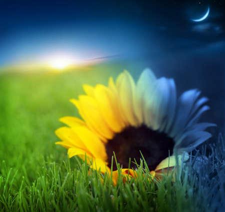 잔디와 시간 전환에 꽃의 주야의 개념적 이미지