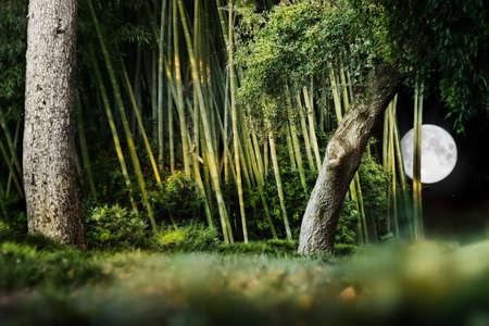 Surréaliste composition du paysage nocturne d'un jardin japonais avec des arbres, la lune en bambou et lumineux dans le ciel nocturne. Banque d'images - 8552192