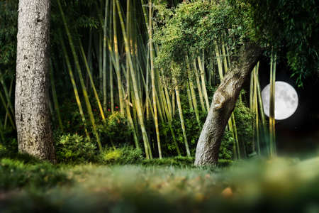 Surreal night landscape composition of a Japanese garden with trees, bamboo and bright moon in night sky.