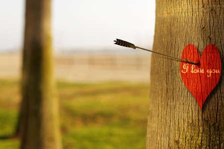 """Fotografía de concepto abstracto de una flecha peircing un corazón rojo en el árbol con la frase """"te amo"""""""