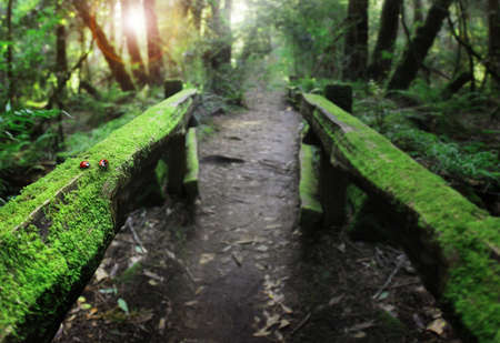 hand rails: Secluded path in beautiful forest with moss covered wooden hand rails looking toward rising sun