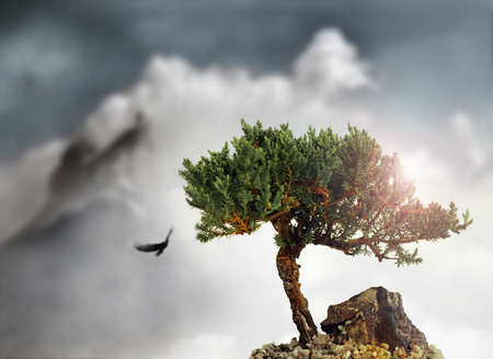 Stylized landscape of a single cypress tree on top of a mountain amidst gray clouds with a flying eagle in the sky