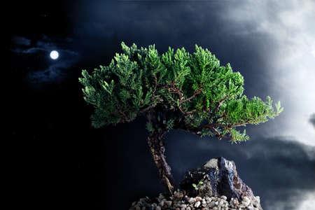 Arbre solitaire dans le ciel nocturne avec la lune, les étoiles et le nuage Banque d'images - 9789932