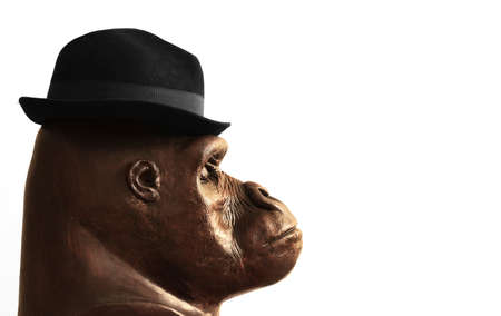 Concept photo of a sculpture of a gorilla head in profile wearing a businessman hat with lots of white copy space Foto de archivo