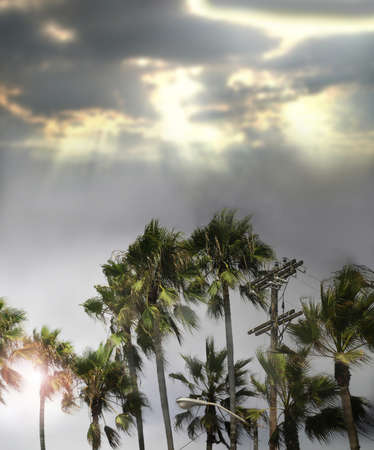 typhoon: Palm tree scene after a storm with rays of light streaming down from clouds Stock Photo