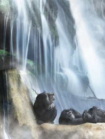 Group of 3 monkeys resting on top of rocks in front of powerful waterfall photo