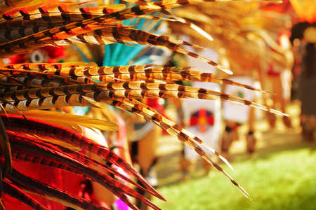 Abstract background featuring colorful feathers