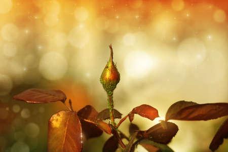 Unopened rosebud against magical garden background in warm vintage color tones