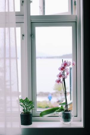 orchid house: Orchid and crassula on the windowsill of the house Stock Photo