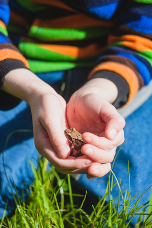 tiny frog: Frog in the hands of a child