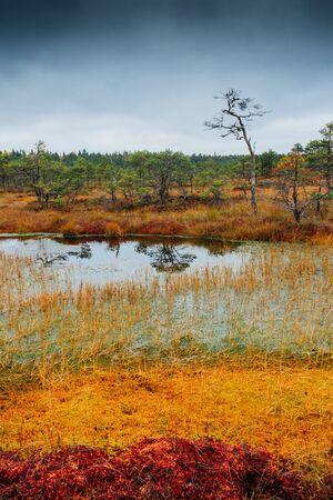 estonia: Swamp Kakerdaja in Estonia at the autumn