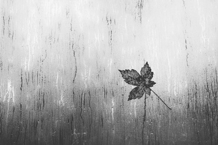rain wet: Maple leaf on a window in the rain