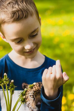 gently: Boy gently holding ladybug