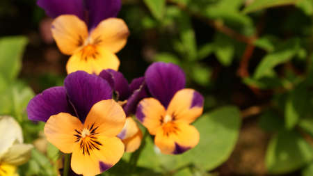 chear: Orange and Purple Natural Beauty