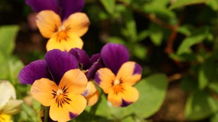 chearful: Orange and Purple Natural Beauty