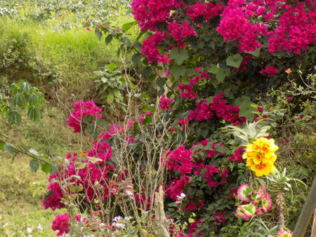 Colourful flowers and bushes