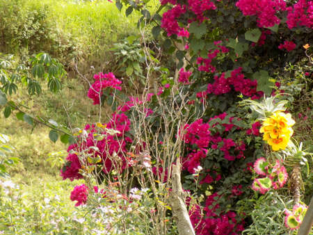 Beautiful flowers and thorny bushes