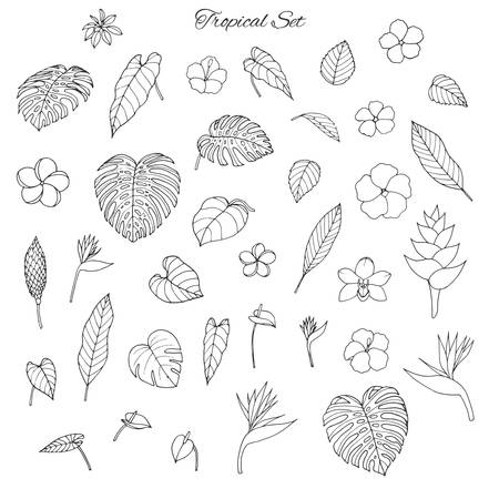 Hand drawn tropical set with monstera and banana leaves, hibiscus, heliconia, plumeria, anthurium, orchid 