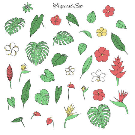 Vector tropical collection with monstera and banana leaves, hibiscus, heliconia, plumeria, anthurium, orchid and bird of paradise flowers isolated on the white background. Drawn exotic floral elements.