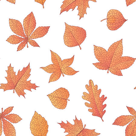 Vector autumn seamless pattern with oak, poplar, beech, maple, aspen and horse chestnut leaves and physalis of orange color on the white background. Fall ornament with detailed foliage.
